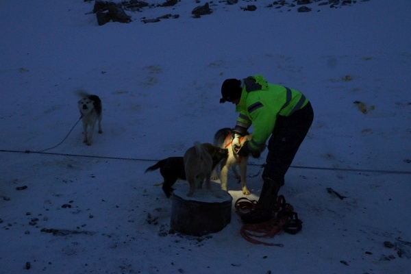 traîneau, attelage, chiens, banquise, Ittoqqortoormiit