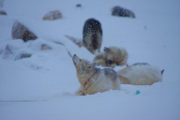 tempête, neige, éphémérides, nuit-polaire, scoresby-sund
