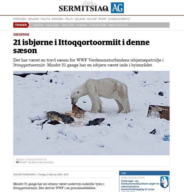 ours-polaire, ursus-mari, chasse, arctique, Scoresby-Sund